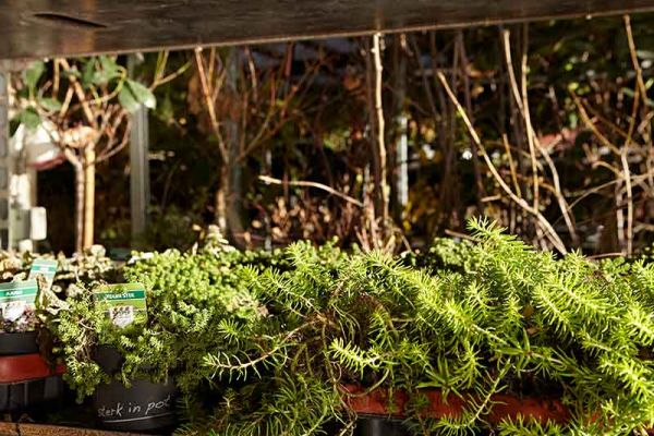 bloemen-en-planten-034216D2F3-AA0B-3993-26C8-F7EE4D980C62.jpg