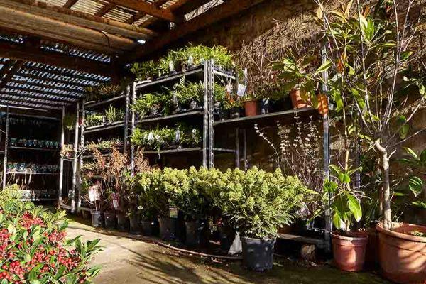 bloemen-en-planten-0538F5DCFE-989C-06AE-AA89-9EC48AC17CDD.jpg