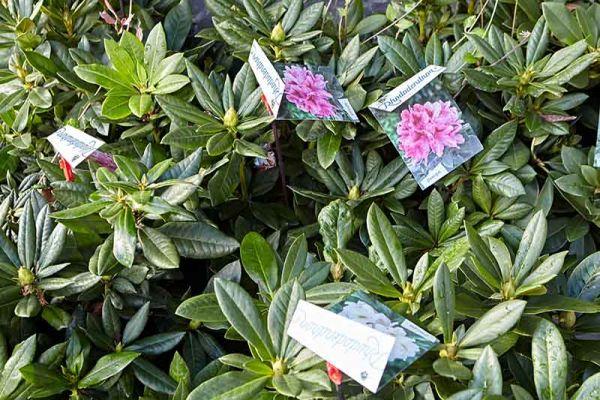 bloemen-en-planten-07F2496AF6-85E9-0932-E838-085CD8FC83A4.jpg