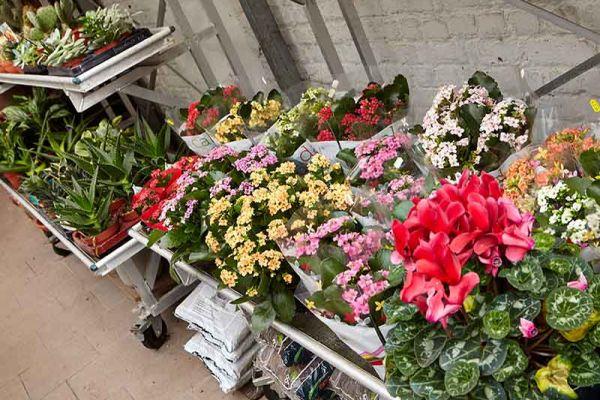 bloemen-en-planten-1216EAA792-C0D4-D38E-3BAD-B990639A3C36.jpg