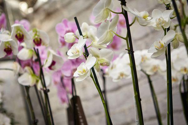 bloemen-en-planten-139A4DE6FD-FE24-9138-9336-BBB581D0EB96.jpg